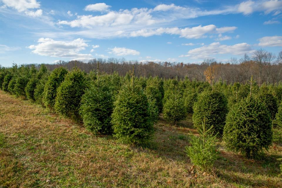 Sunset Hill Tree Farm christmas tree farm | ChristmasTreeFarms.net