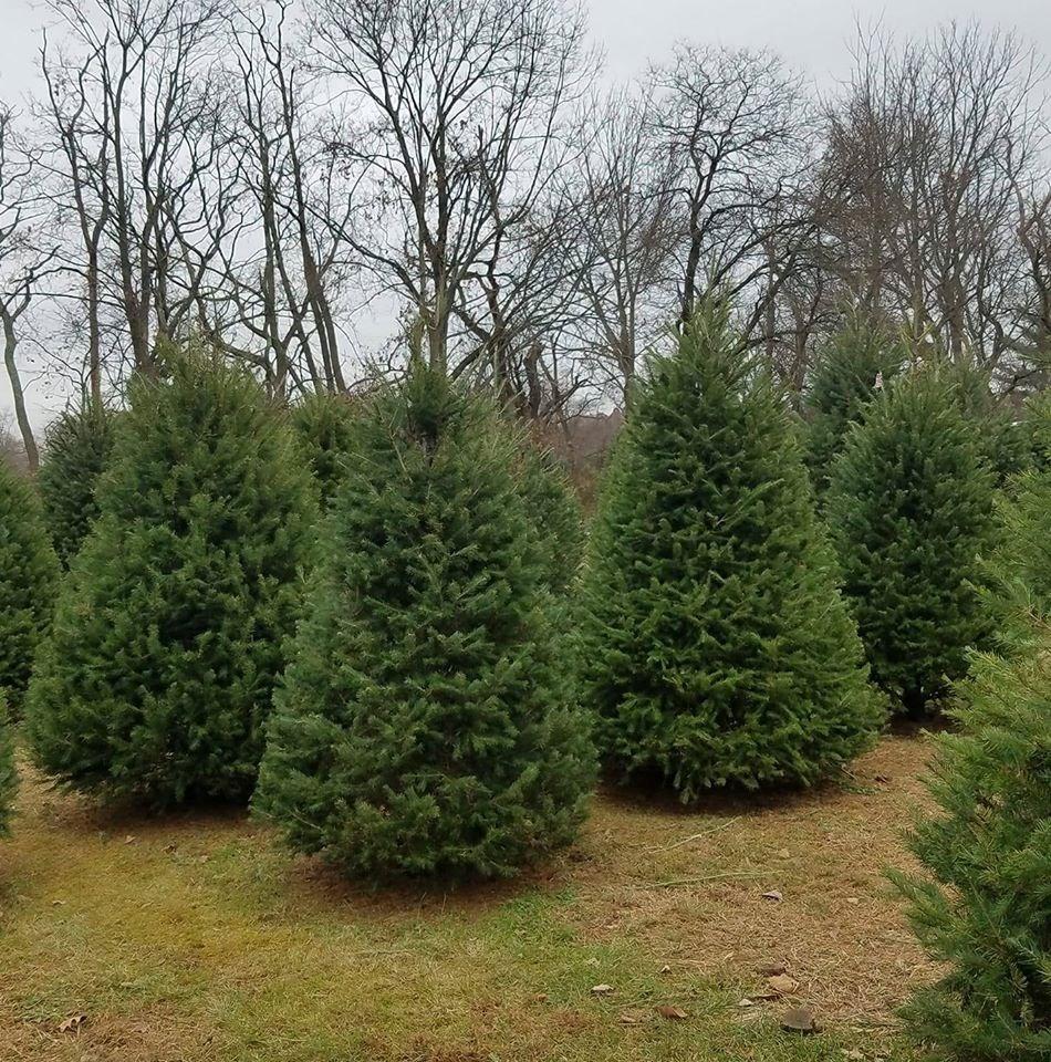Cut Your Own Christmas Tree York Pa: Deerfield Farm Christmas Tree Farm