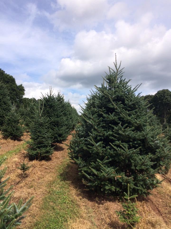 Kogut's Hemlock Hill Tree Farm Inc. christmas tree farm | ChristmasTreeFarms.net