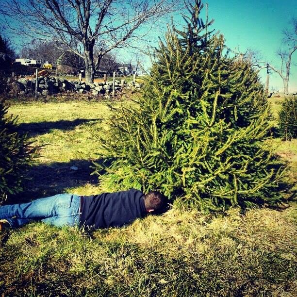 Cut Your Own Christmas Tree York Pa: Kip's Christmas Trees Christmas Tree Farm