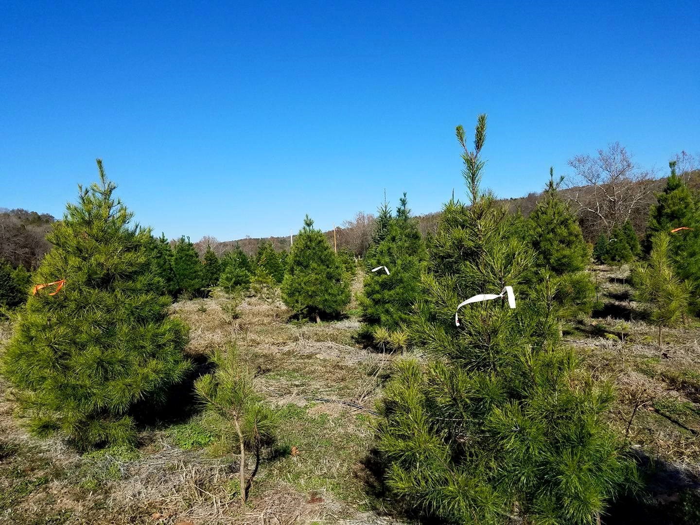 Meert Tree Farms Inc. christmas tree farm ...