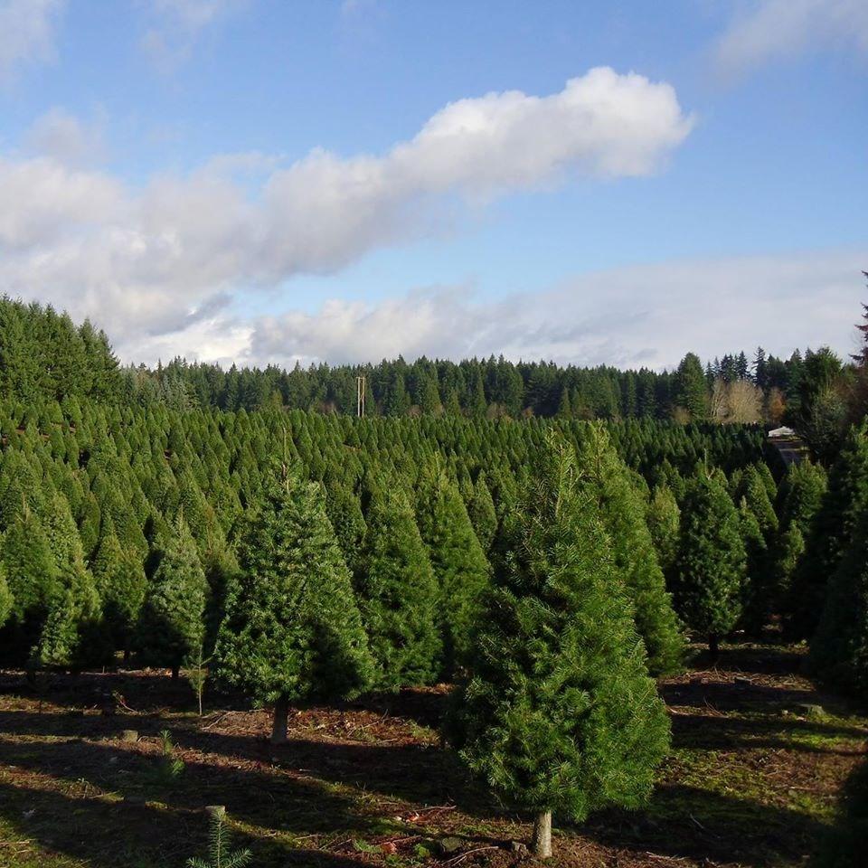 Cut Your Own Christmas Tree York Pa: Glenwood Tree Farm Christmas Tree Farm